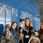 Emprender en Pet Tech: todo lo que hemos aprendido